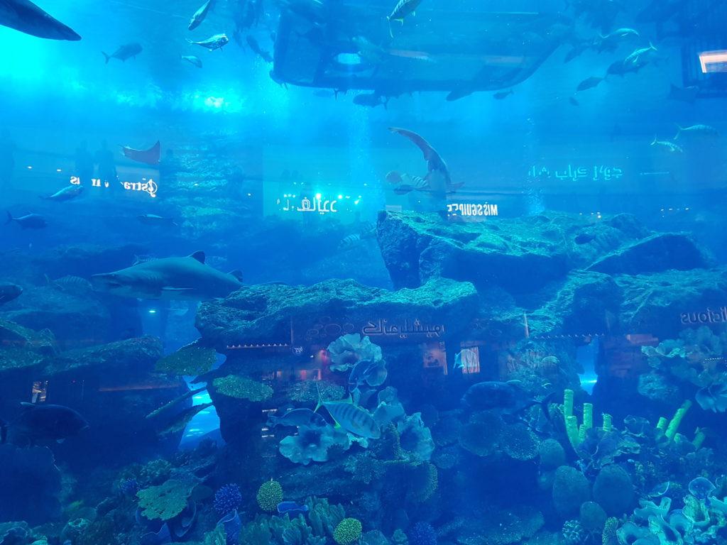 Dubaï mall aquarium