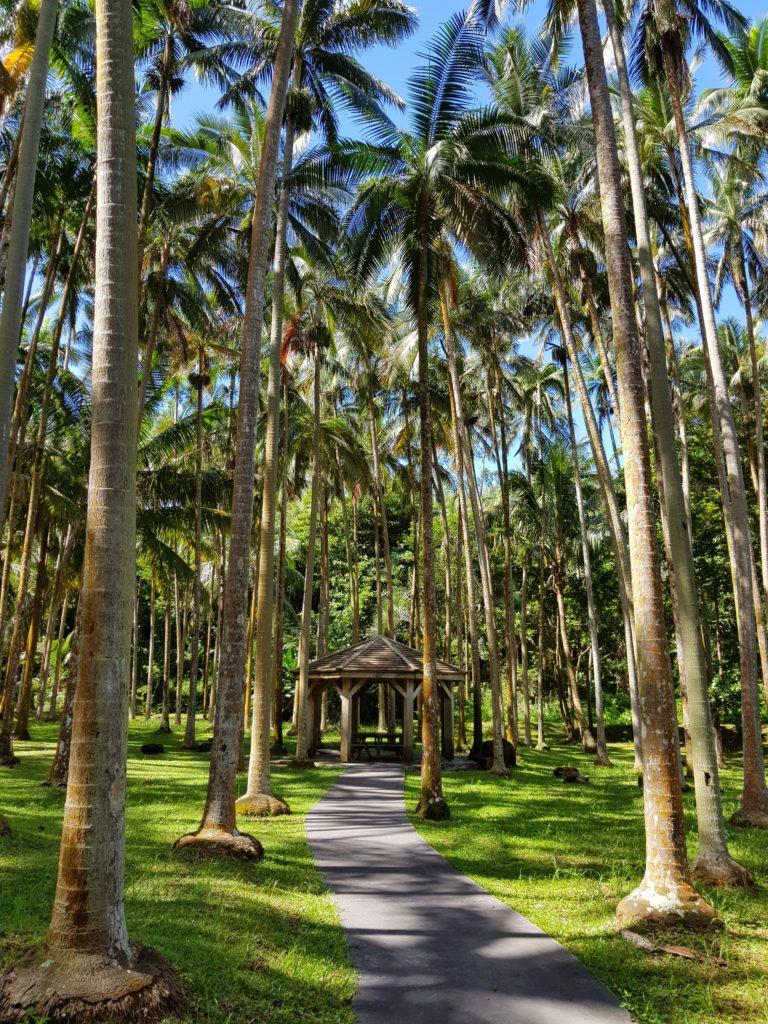Cocotiers-Anse-des-cascades