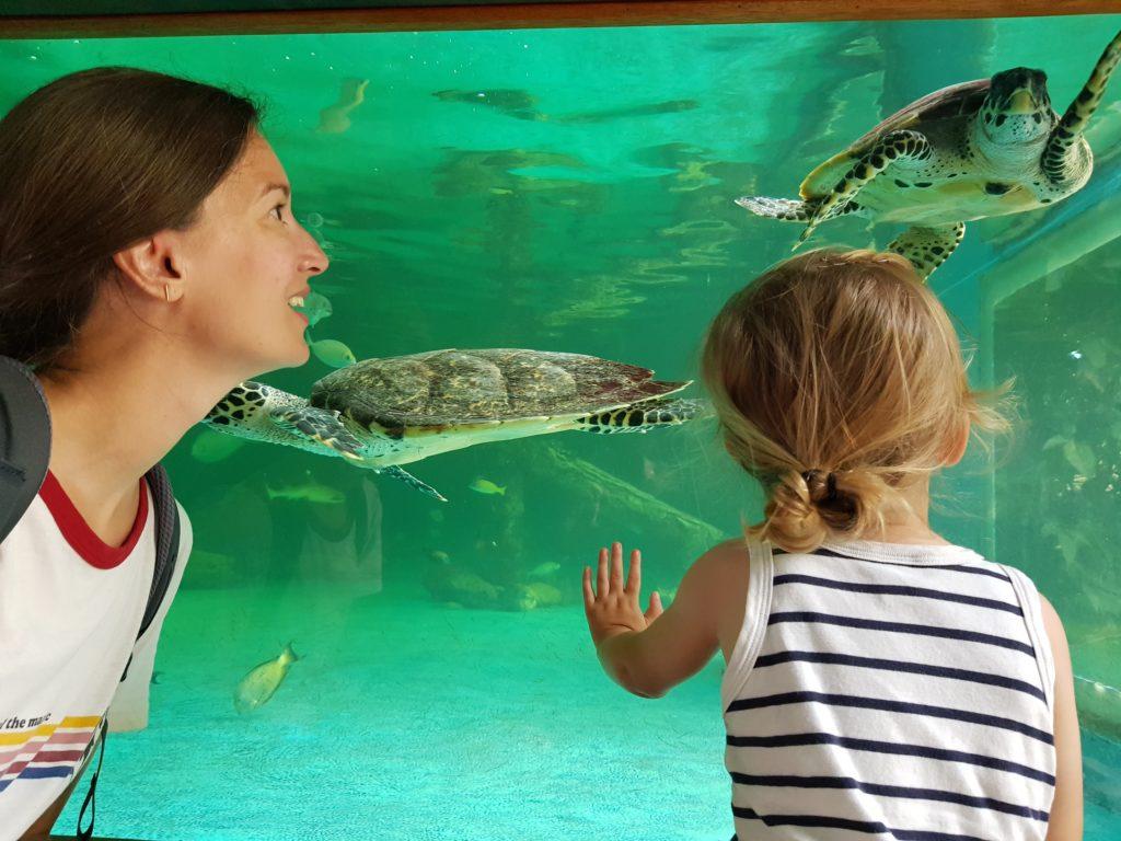 Aquarium Maurice Pointes Au Canoniers