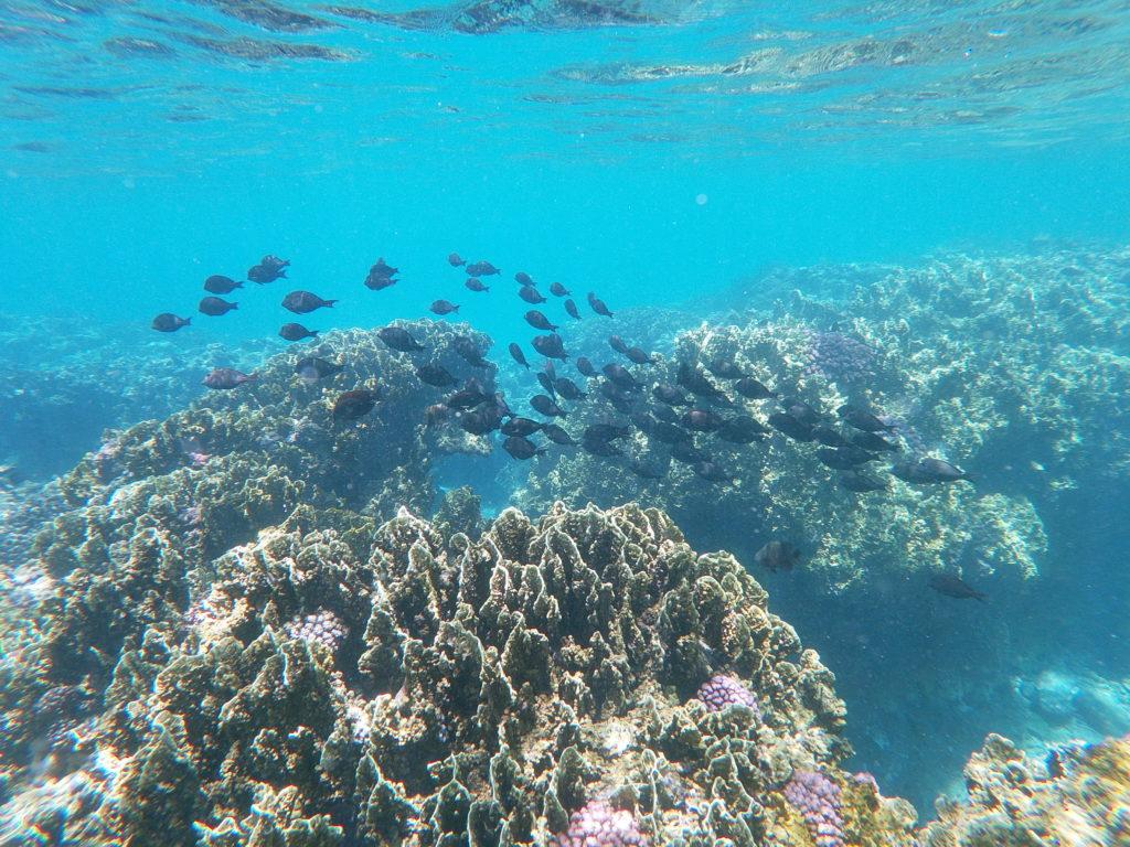 Snorkelling Lagon Maurice