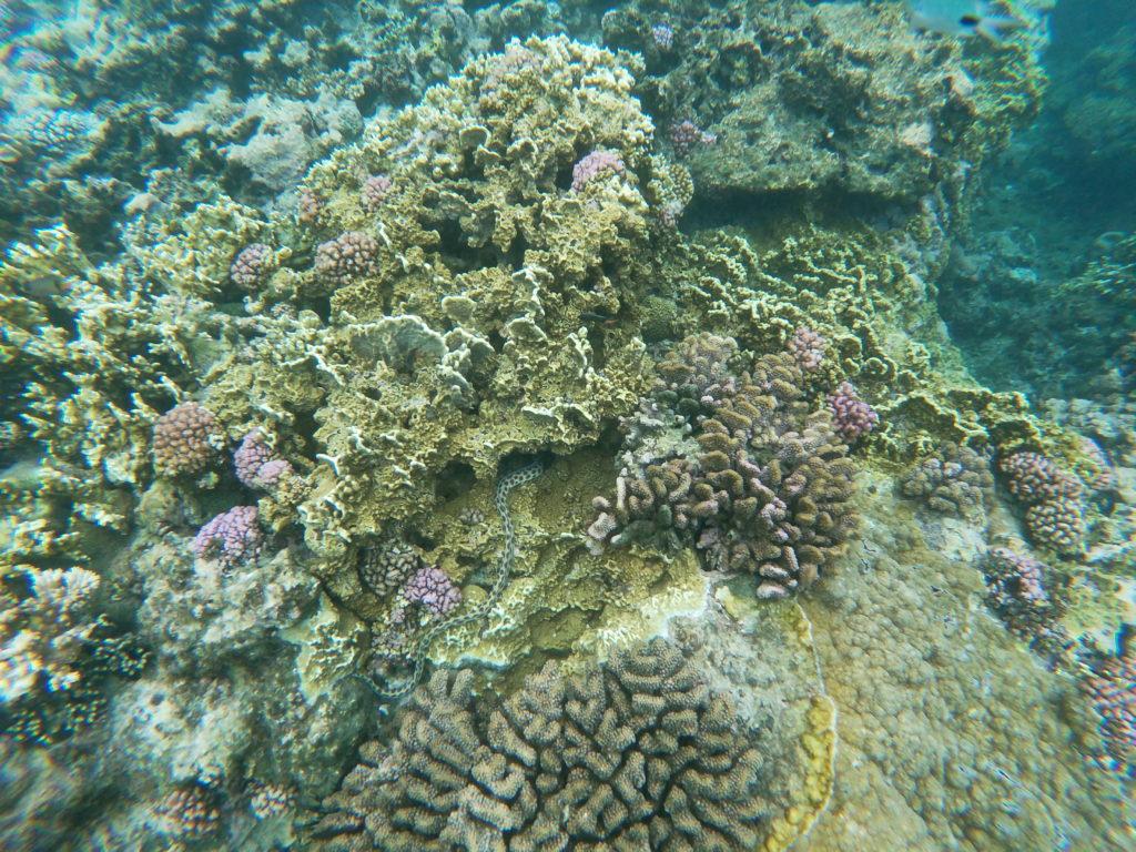 Snorkelling Trou Aux Biches