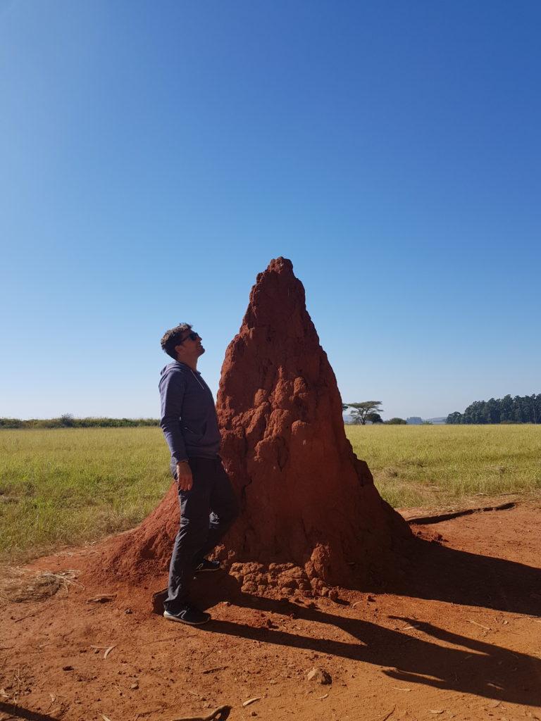 Termites Swaziland