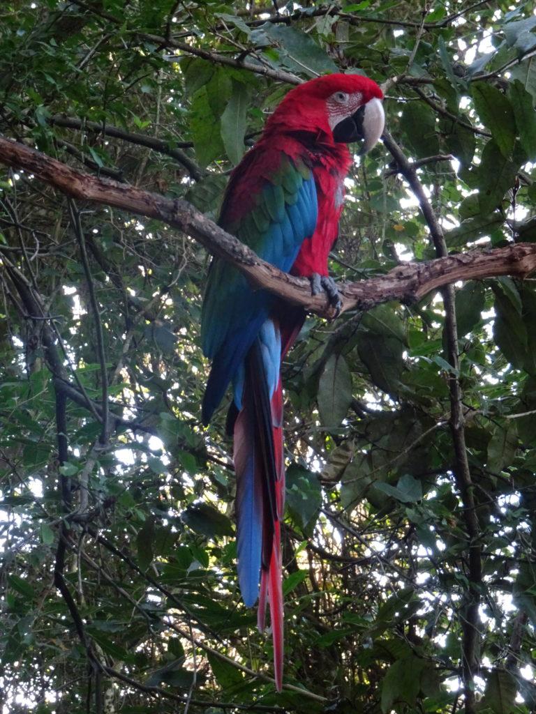 Parc Birds Of Eden